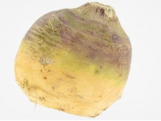Rutabaga Bio Origine France (Local)