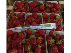 Fraises Bio Local (En Direct Du Producteur) Origine France 250 grs