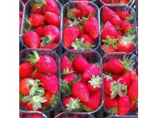 Fraise Ciflorette Origine France (Local) 250 grs