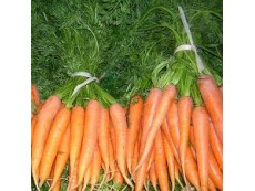 Carottes Botte Origine France